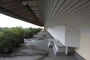 The open-air balcony with bonsai pine trees located in-between the spots where the patients bed were located.